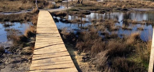 Nieuwe houten brug over de Roode Beek Brunssummerheide